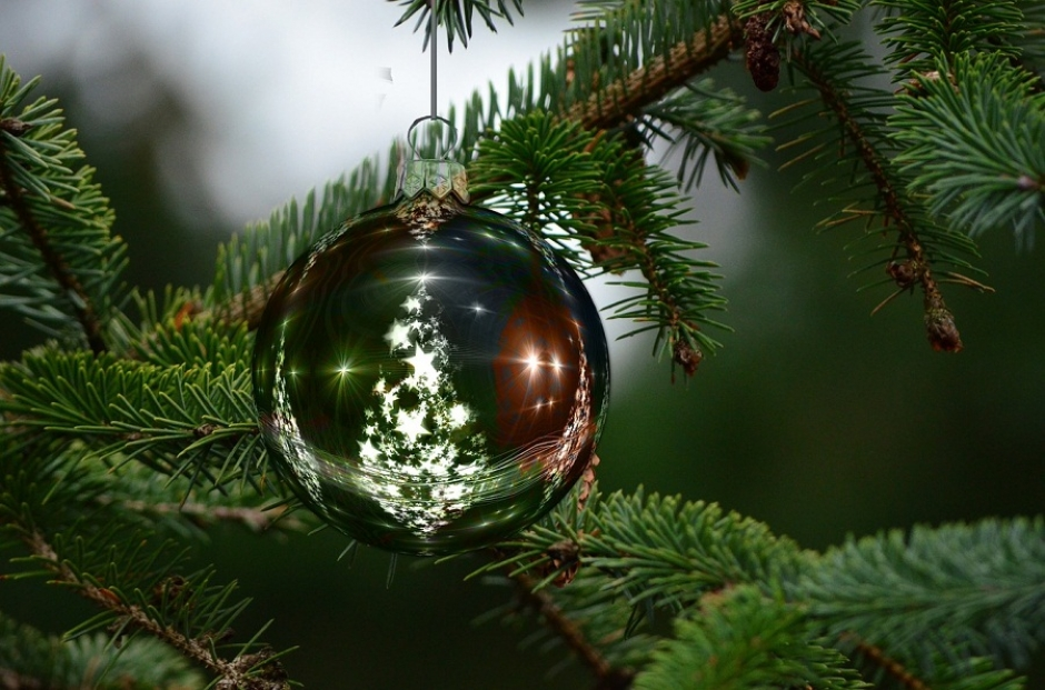 Germans Buy Nearly 30 Million Christmas Trees