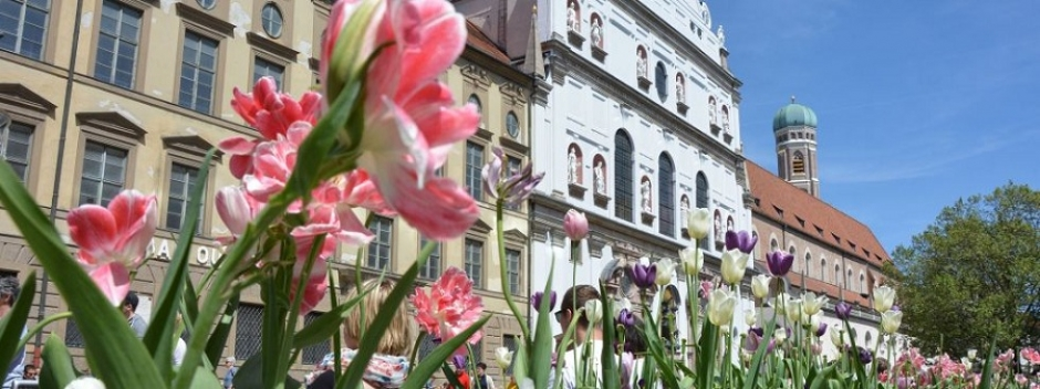 Summer in the City: 150,000 Summer Plants for Munich